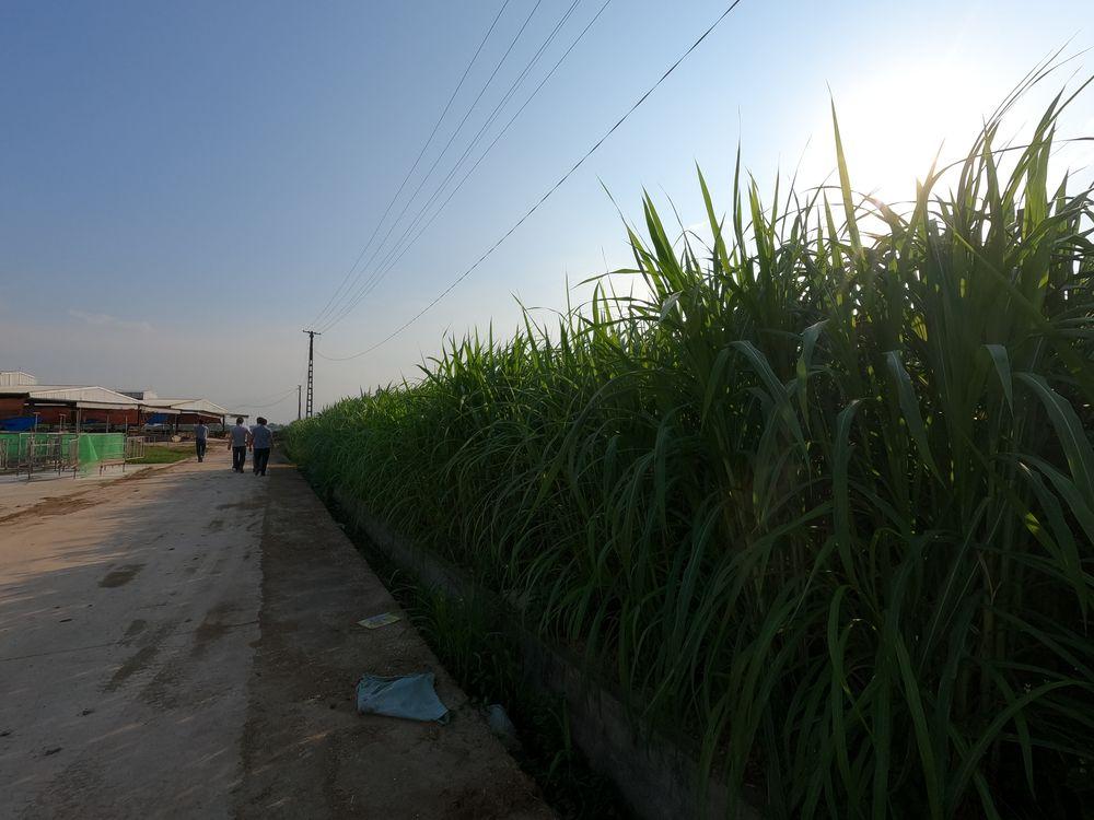 Bố trí gần với khu vực trồng cỏ cung cấp nguồn dinh dưỡng